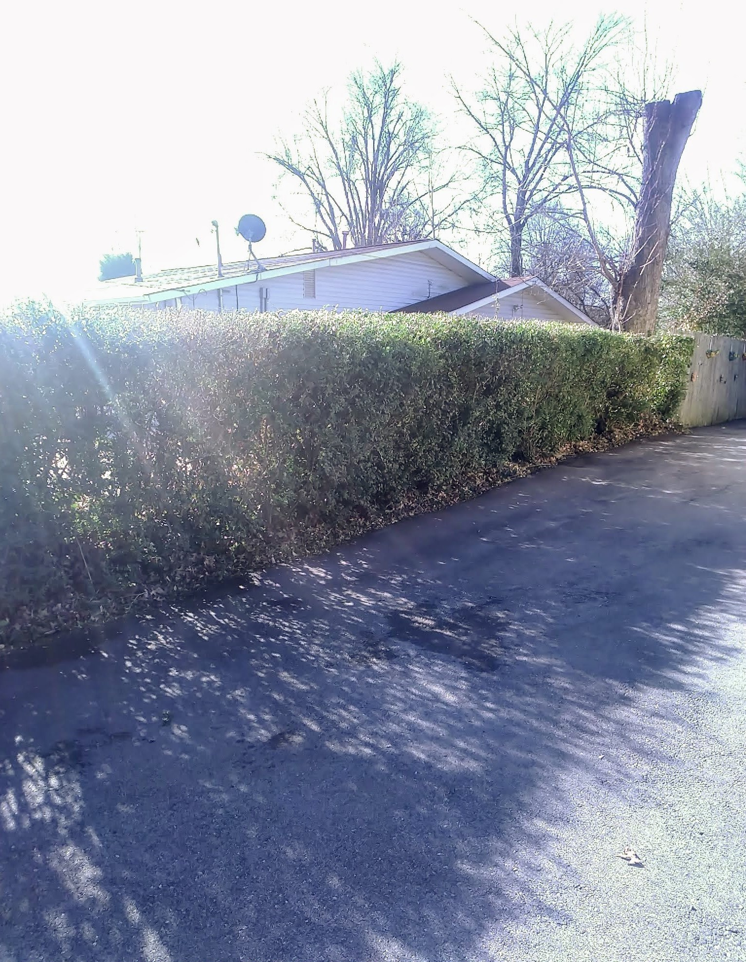 A line of hedges that have been neatly and uniformly trimmed by ELCS.
