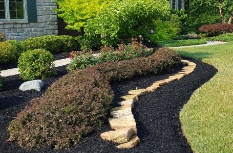 A very large landscape bed filled with fresh black mulch, decorative rocks, and neatly pruned shrubs.