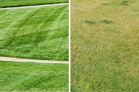 A before and after photo comparing a lawn that has been fertilized. After being fertilized, the grass is noticeably greener and stronger.