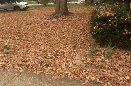 A large residential lot covered in fallen leaves before a leaf removal service.